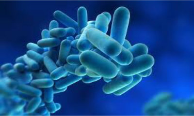 Affordable Legionella Risk Assessment Services.